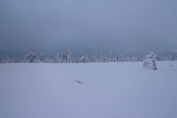 ラップランドの樹氷 Muonio